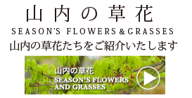 山内の草花 SEASON'S FLOWERS & GRASSES